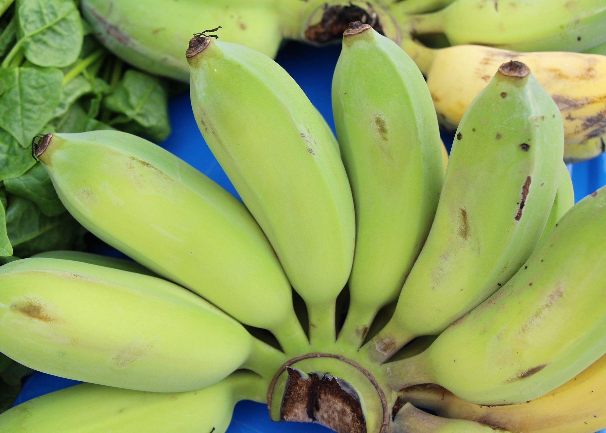 What are burro bananas?
