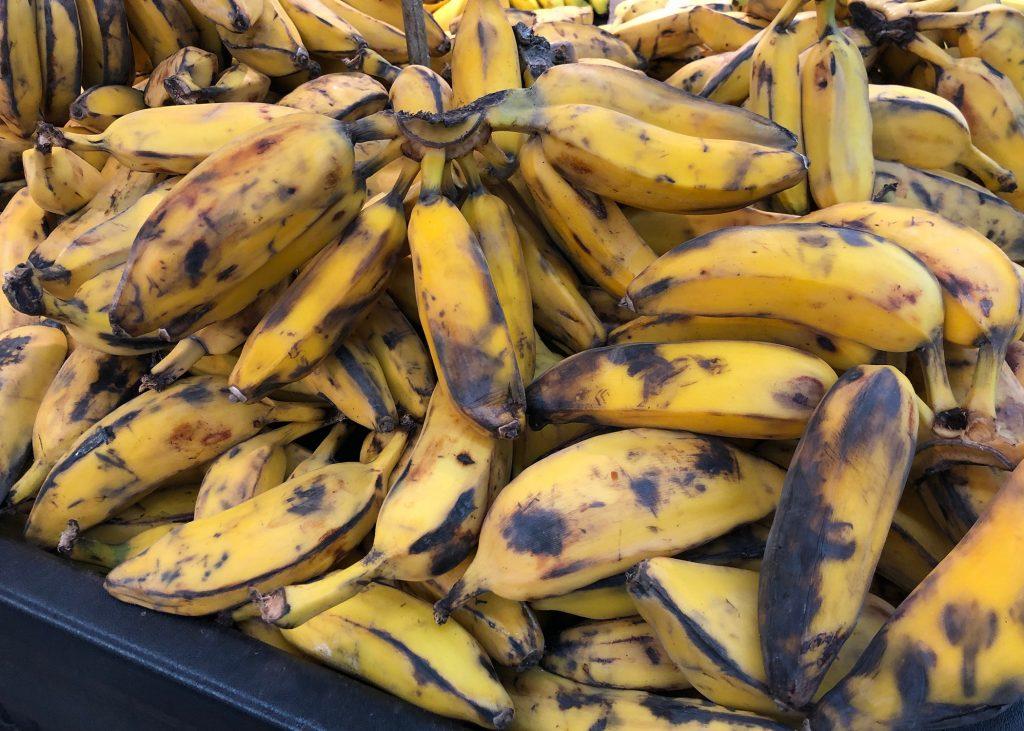 Burro banana vs cavendish banana