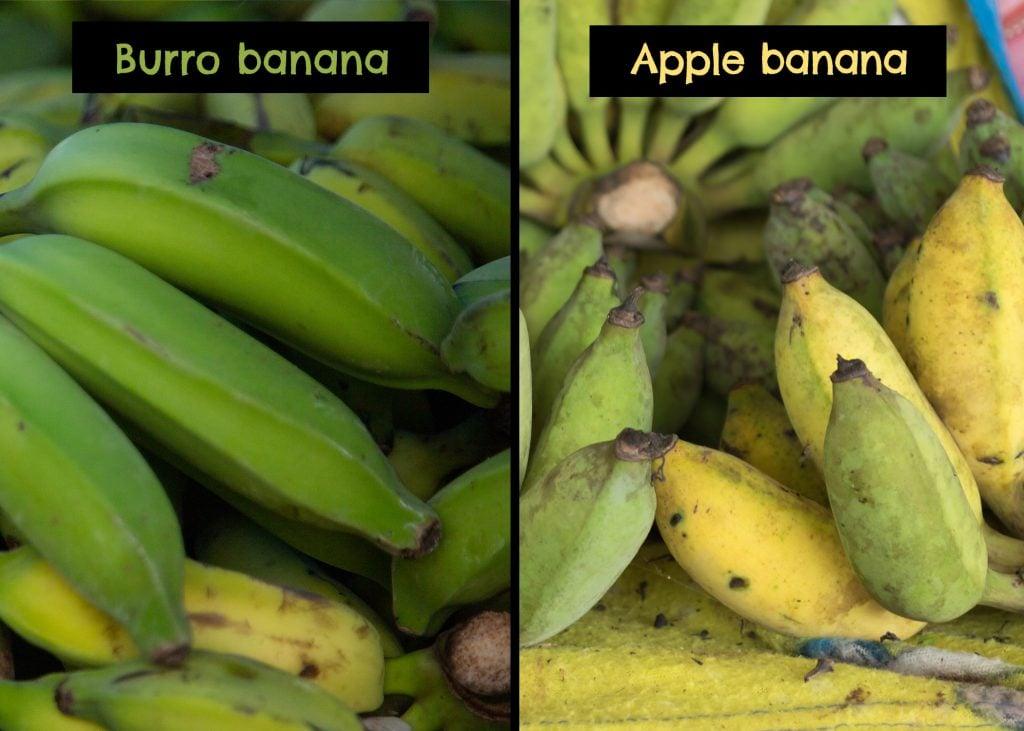 burro banana vs thai vs apple vs mini bananas