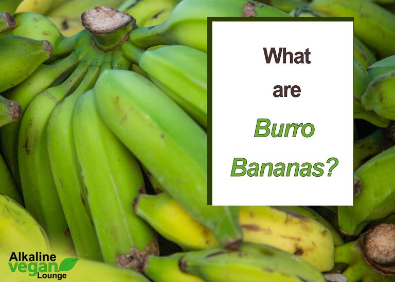 Burro bananas vs regular bananas